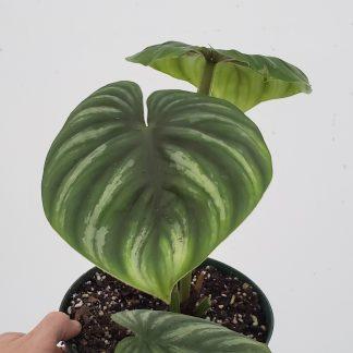 Plant Purge